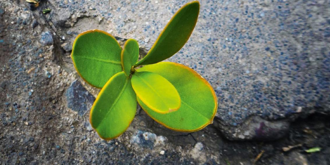 Eingangsbild Artikel Resilienz & Psyche